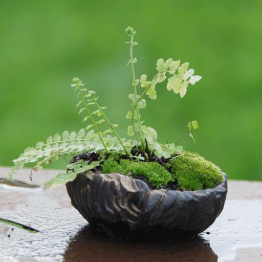 Les Pots pour Plantes et Bonsaïs